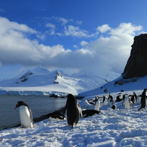 OCEANWIDE EXPEDITIONS ©