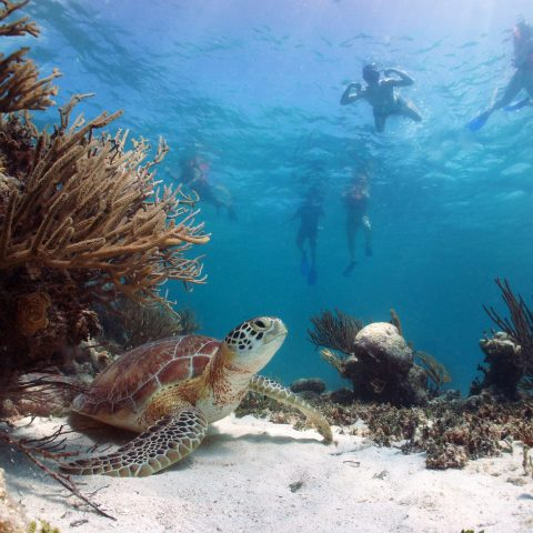 turtle diving mexico